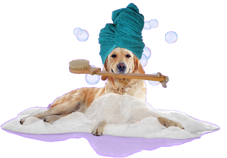 Mobile Dog Grooming Cancellation Policy