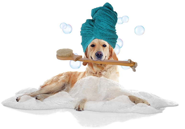 Lucky Dog Mobile Grooming Spa
